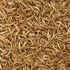 Sušené múčne červy 140g